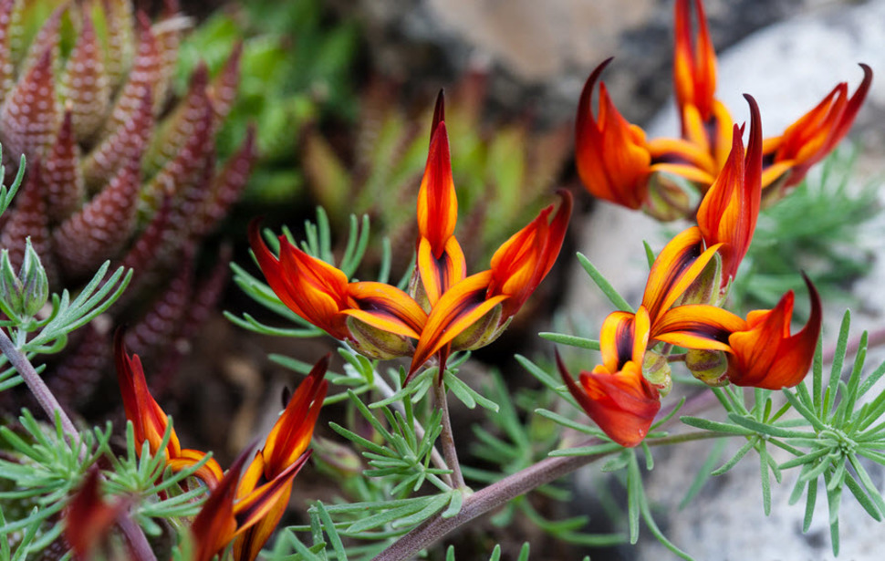 صور زهور جميلة ومدهشة واخرى غريبة