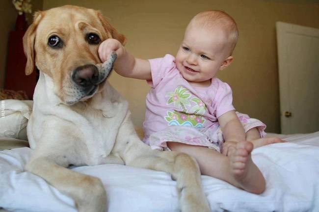 كلاب كبيرة تحرس اطفال صغار