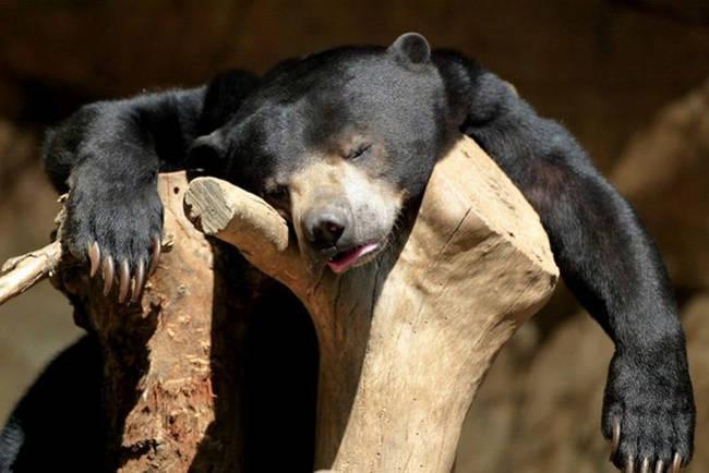 صور حيونات جد متعبة و مضحكة