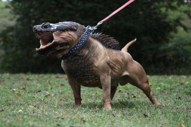 ابداعات الفوتوشوب - حيوانات مركبة مضحكة