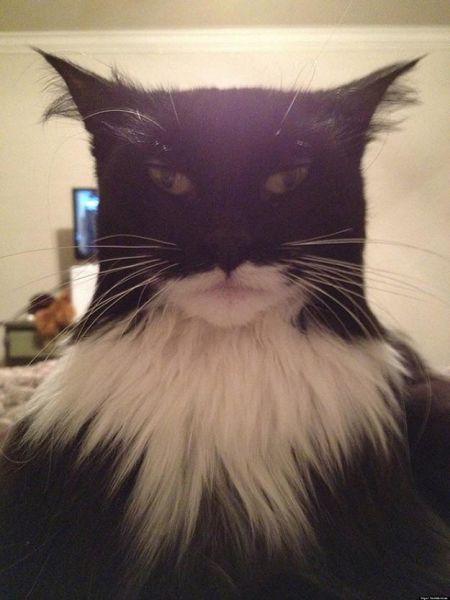 صور قطط مضحكة وجميلة