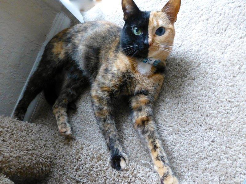 Photos de chatte bizarre