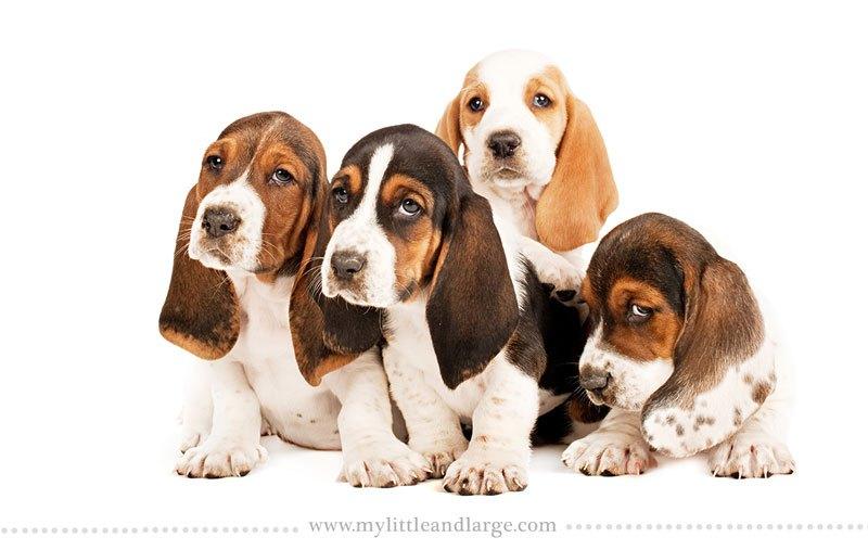 صور كلاب صغيرة عمرها 6 اسابيع