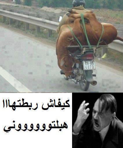 صور مضحكة و نادرة من المغرب