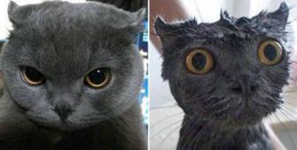 صور مضحكه لقطط قبل و بعد الاستحمام