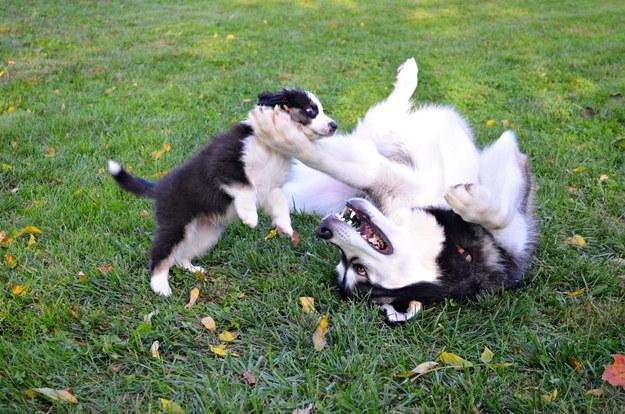 صور كلاب جميلة