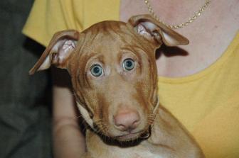 ماذا لو كانت عيون الحيوانات في الأمام