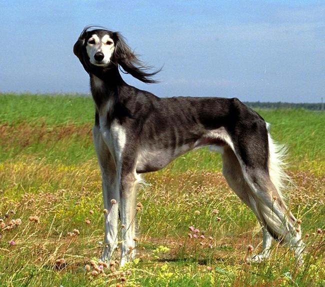صور لكلاب نادرة و غريبة