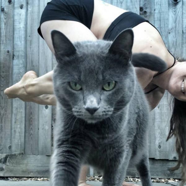 صور قطط طريفة