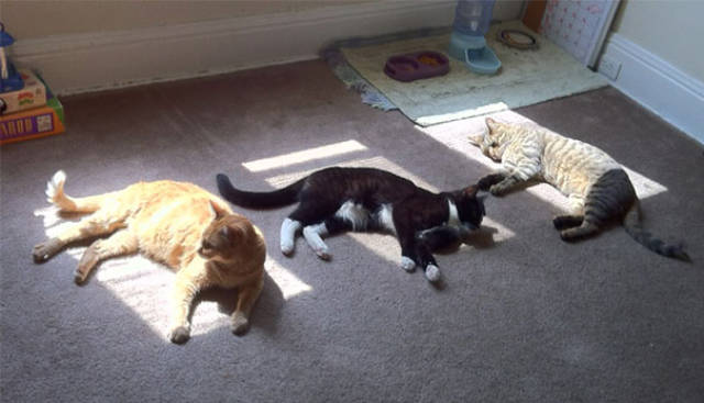 صور قطط جميلة تحب ضوء الشمس