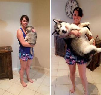 صور كلاب قبل و بعد ان كبرت