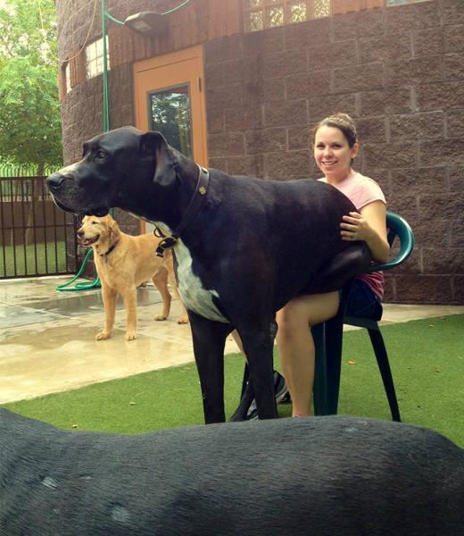 صور كلاب كبيرة تظن نفسها صغيرة