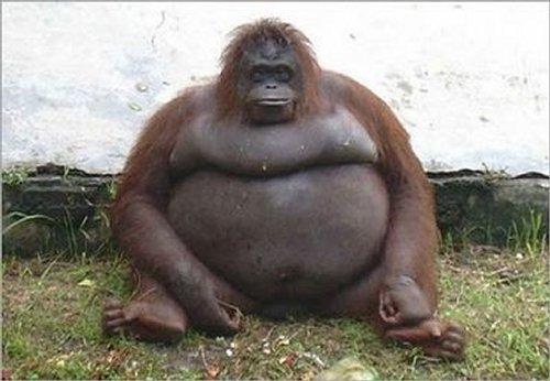 صور مضحكة لحيونات سمينة