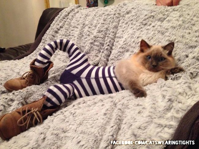 صور قطط غير مؤدبة ترتدي ملابس ضيقة