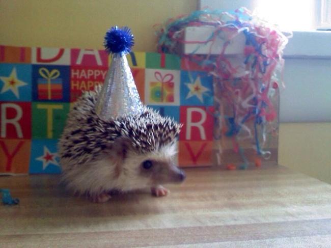 Gluckliche Tiere Feiert Geburtstag Lustige Bilder