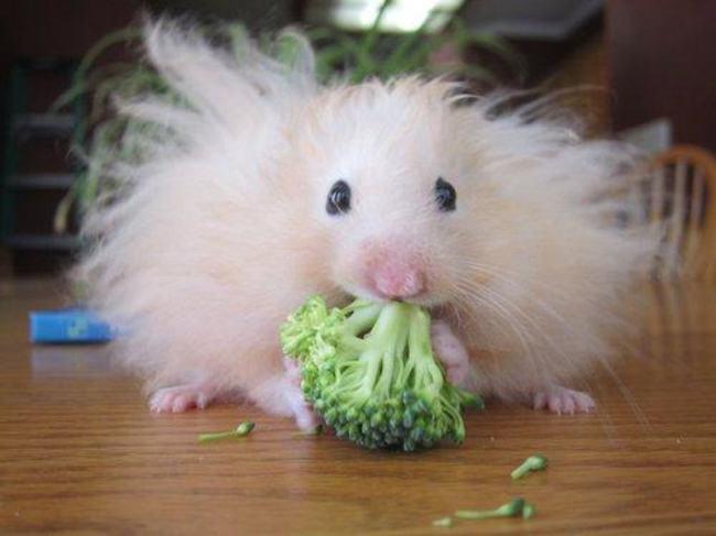 photo drole hamster