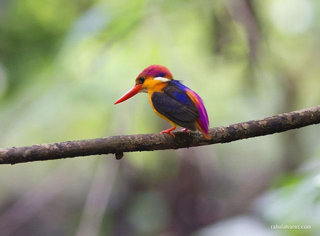 صور عالية الجودة لحيونات في البرية