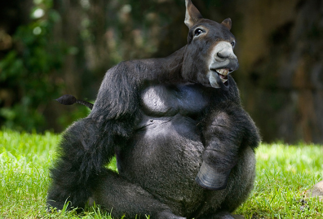 Funny pictures of hybrid animals - Photoshop - animals ...
