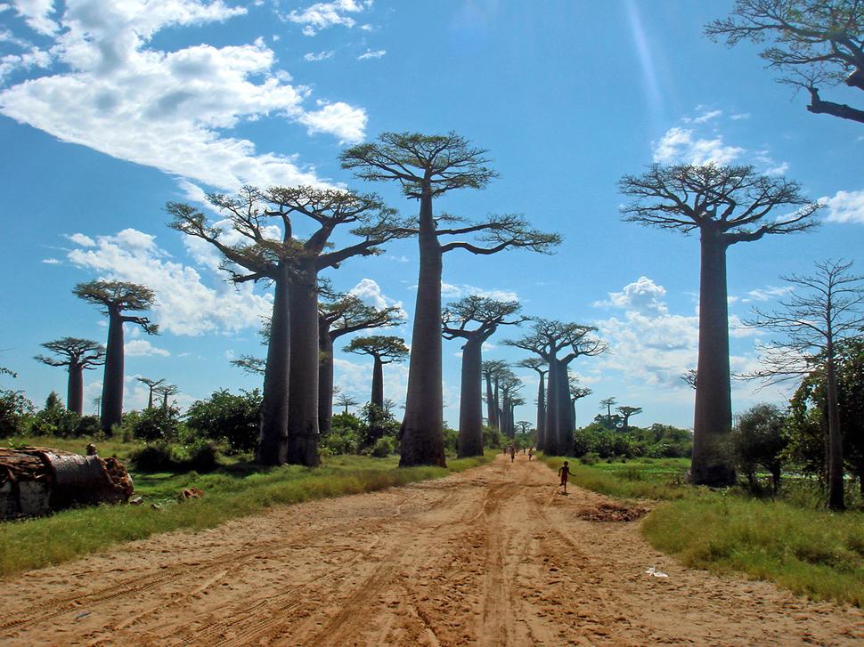 صور الاشجار الاكثر غرابة في العالم