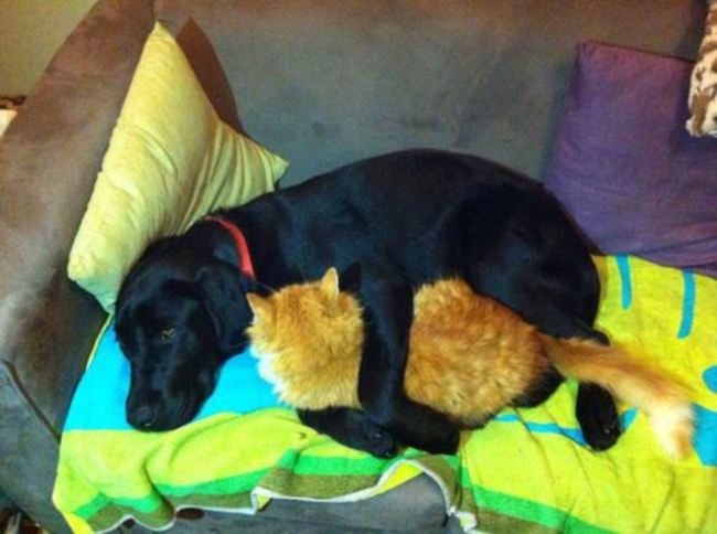 صور كلاب لطيفة تجلس اين يحلو لها