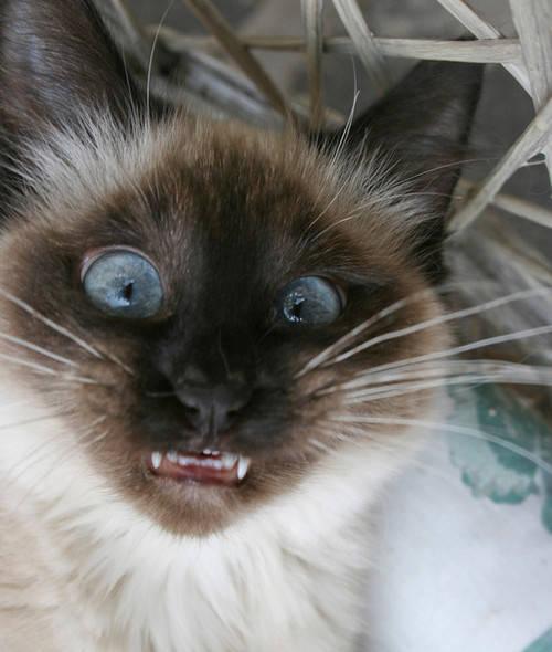 صور سلفي لحيوانات مضحكة