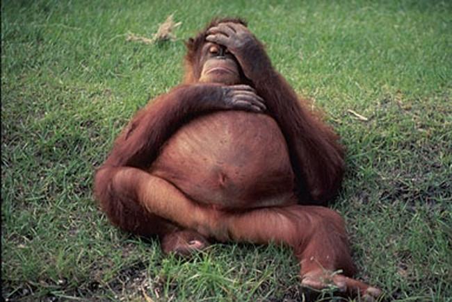 صور حيوانات حاملة ومضحكة