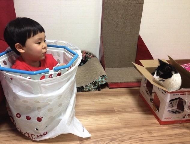 صور قطط ظريفة تنفع ان تكون مربية اطفال