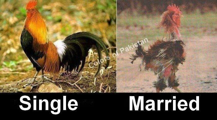 1 صور فيس بوك مضحكة