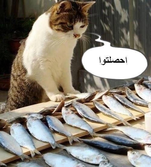 5 صور مضحكة من المغرب