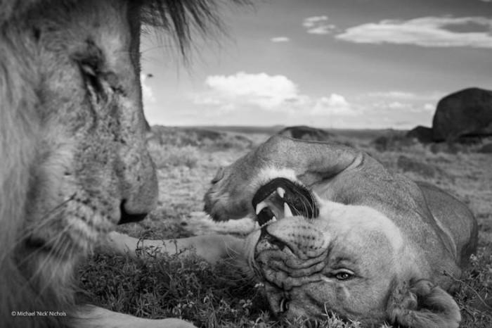 اجمل صور الحياة البرية