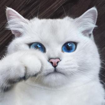 صور قط جميل جدا ذو عيون زرقاء