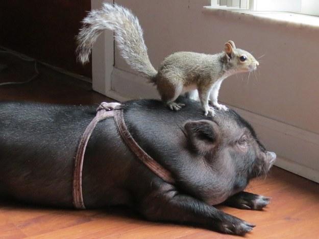 صور اجمل حيوانات مضحكه و ظريفة