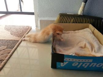 صور قطط جميلة تنام في أي مكان
