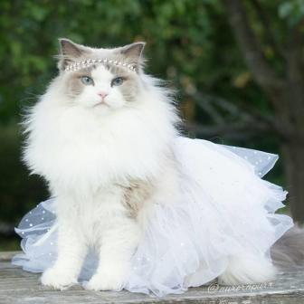 صور أجمل قطة في العالم
