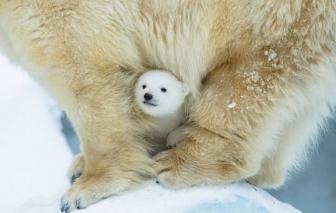 صور جميلة لدببة صغيرة مع أمها