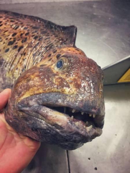 صور أسماك غريبة جدا