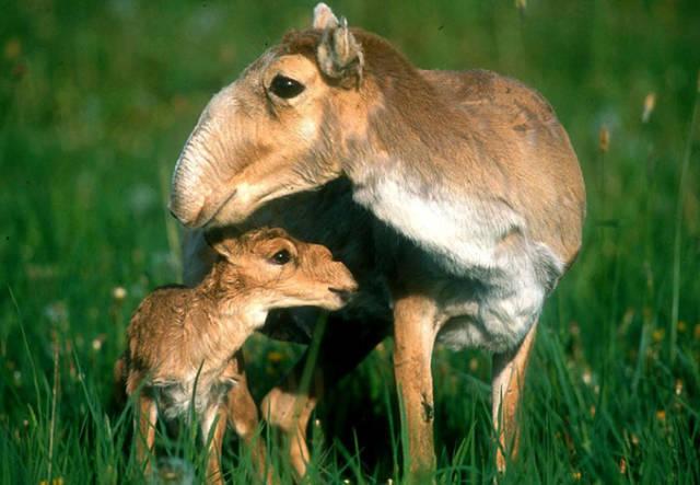 صور طريفة لصغار الحيوانات