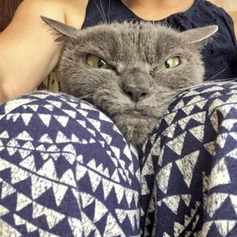 شاهد صور القط الأكثر غضباً في العالم